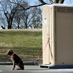 Turd, the 6 1/2-month-old mixed breed dog, waited for his human, Josh Roudybush of Kansas City, who was inside the portable loo near the Occupy KC site in Penn Valley Park.